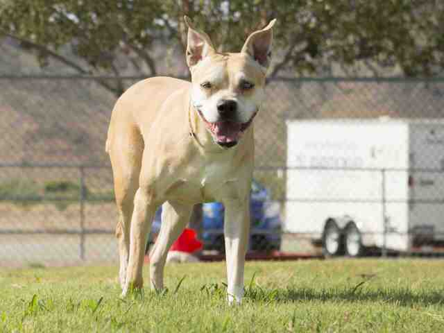 Adoptable pets from Maricopa County Animal Care and Control and Arizona Humane Society (10/5)