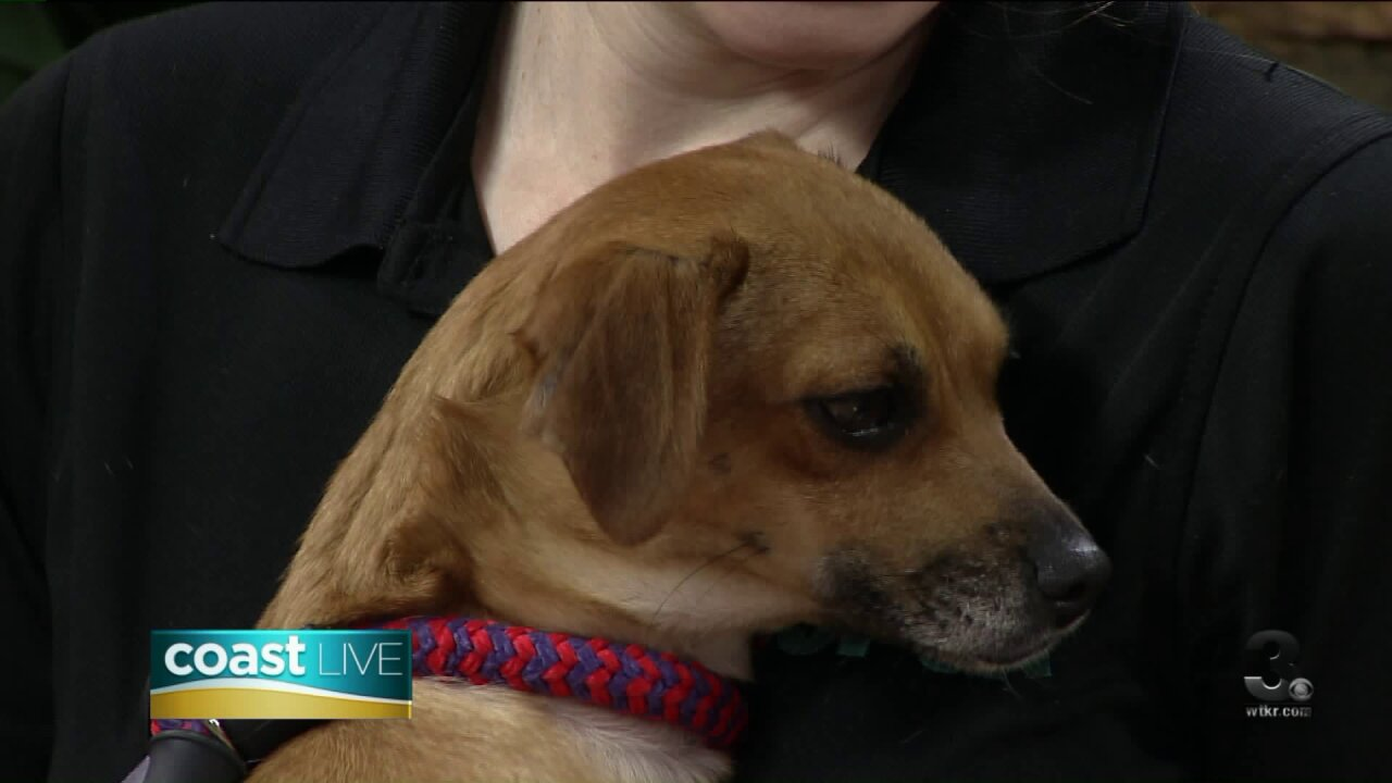 Tips for making a disaster plan that includes your pets on Coast Live