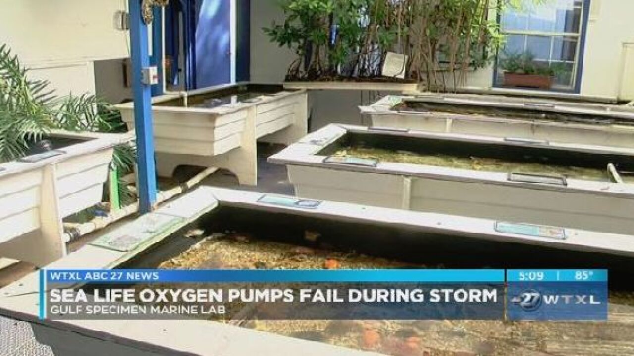 Sea life oxygen pumps fail during Hurricane Michael in Panacea