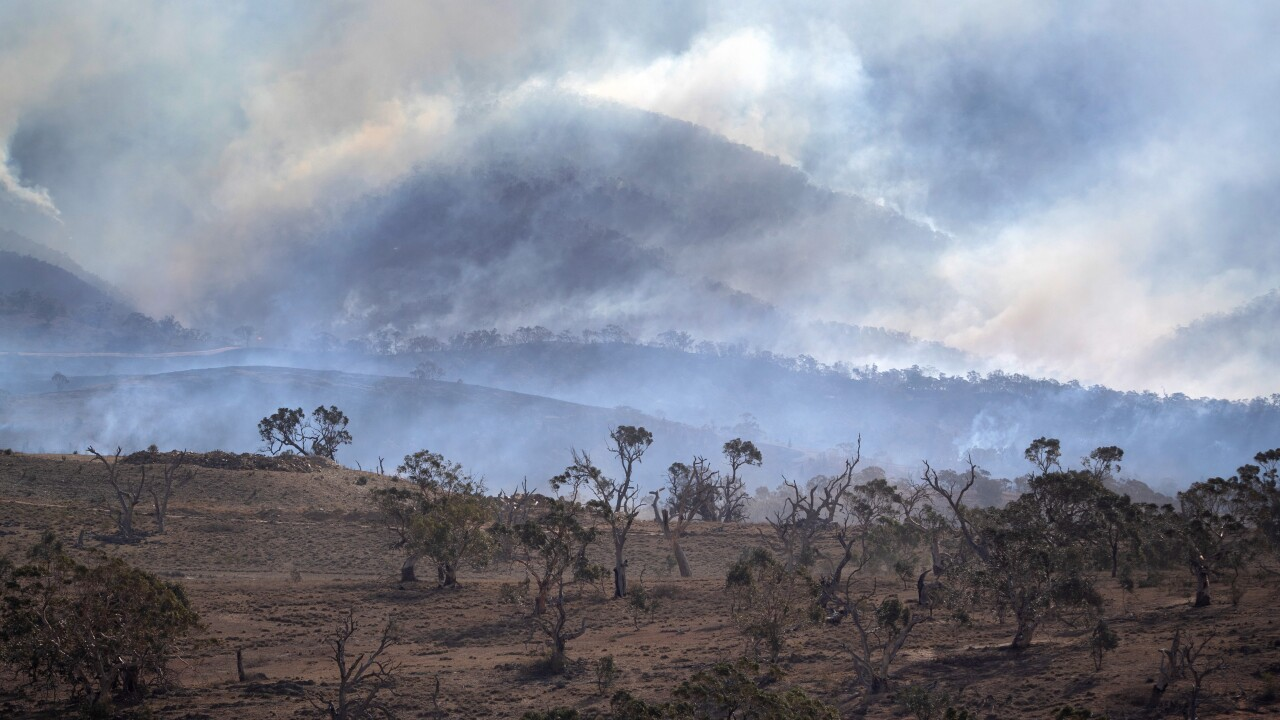 Australian bushfires: All blazes now 'contained' in New South Wales