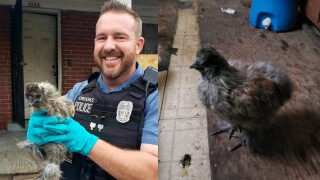 'Fowl' play? Kansas City police take suspects, chicken into custody after burglary