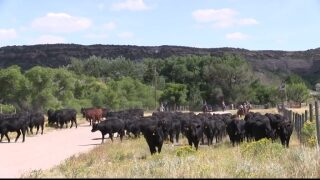 Montana Ag Network: July cattle survey approaches