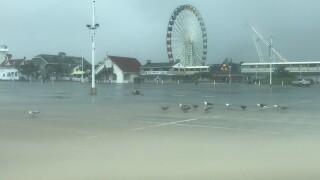 Seagulls as OC inlet