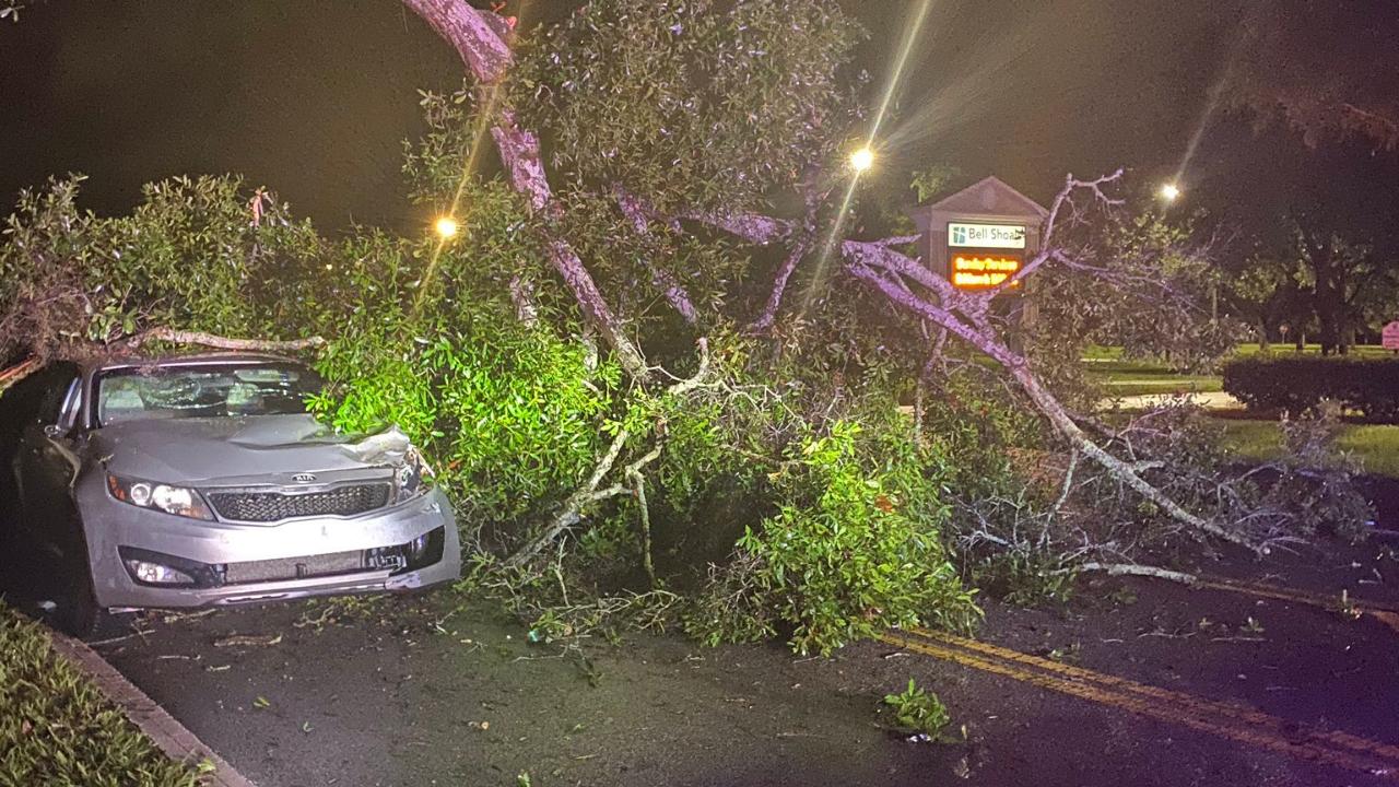 tree on car hillsborough SO.png