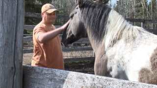 Salute to Service: Valor Equine Therapy Service