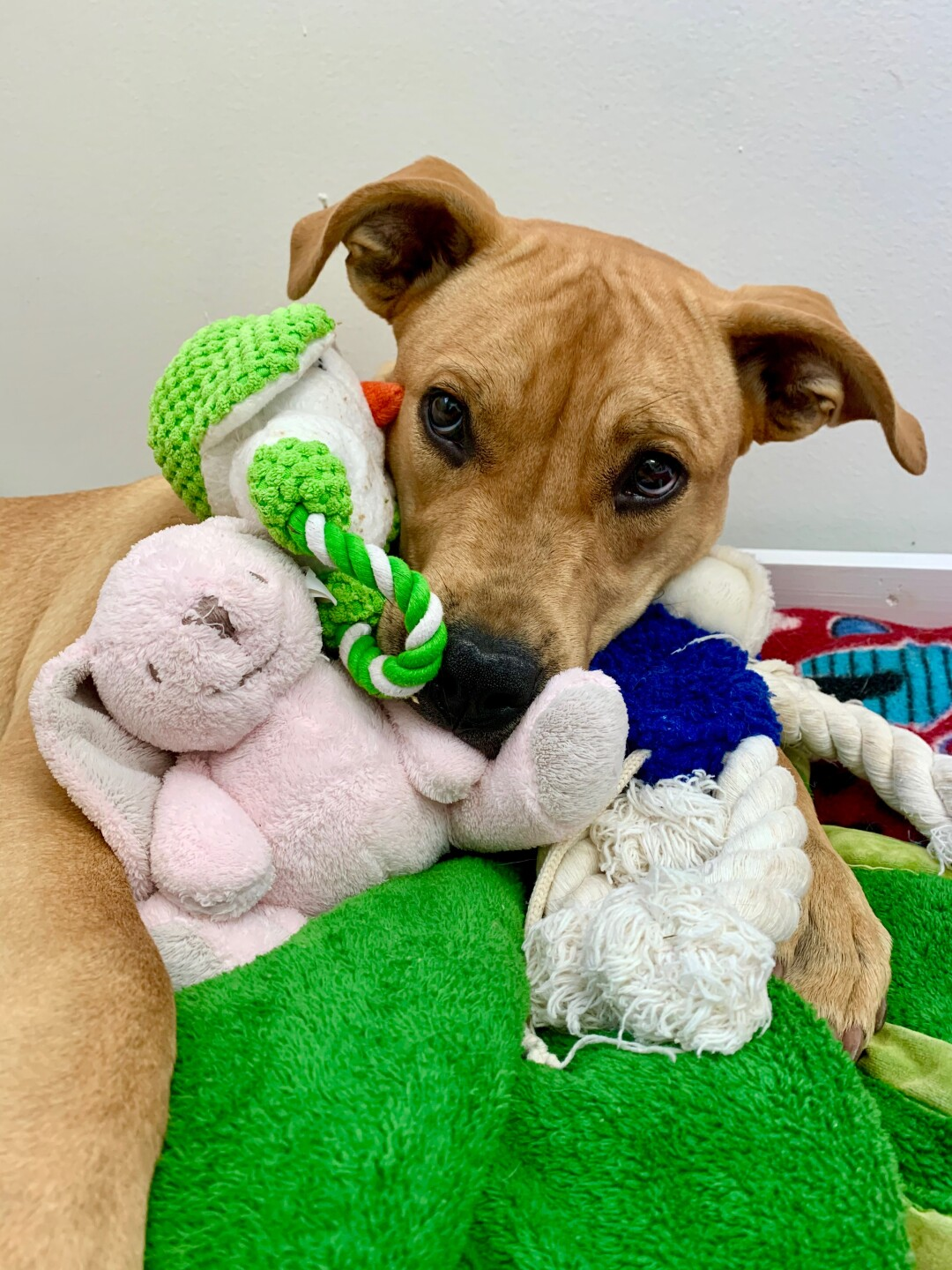 Pet of the Week: Molly Ringwald