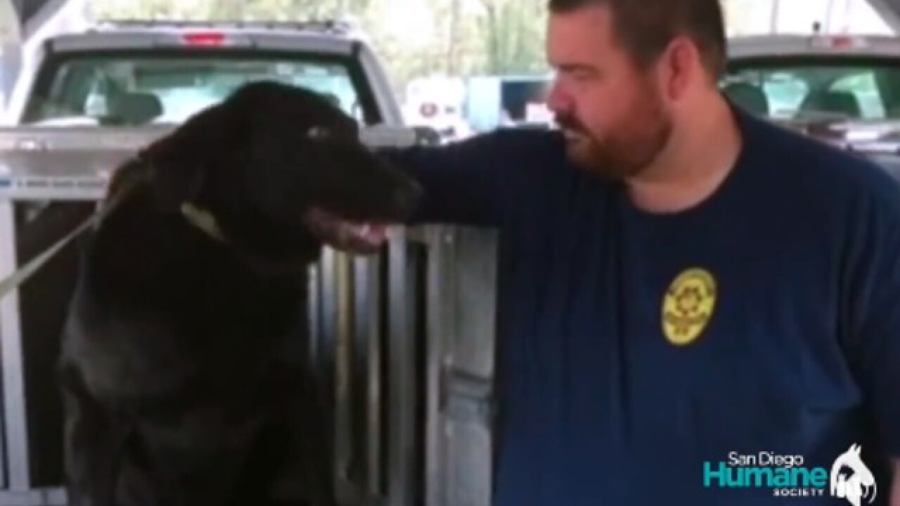 San Diego Humane Society helps rescue labradors from Florence flooding