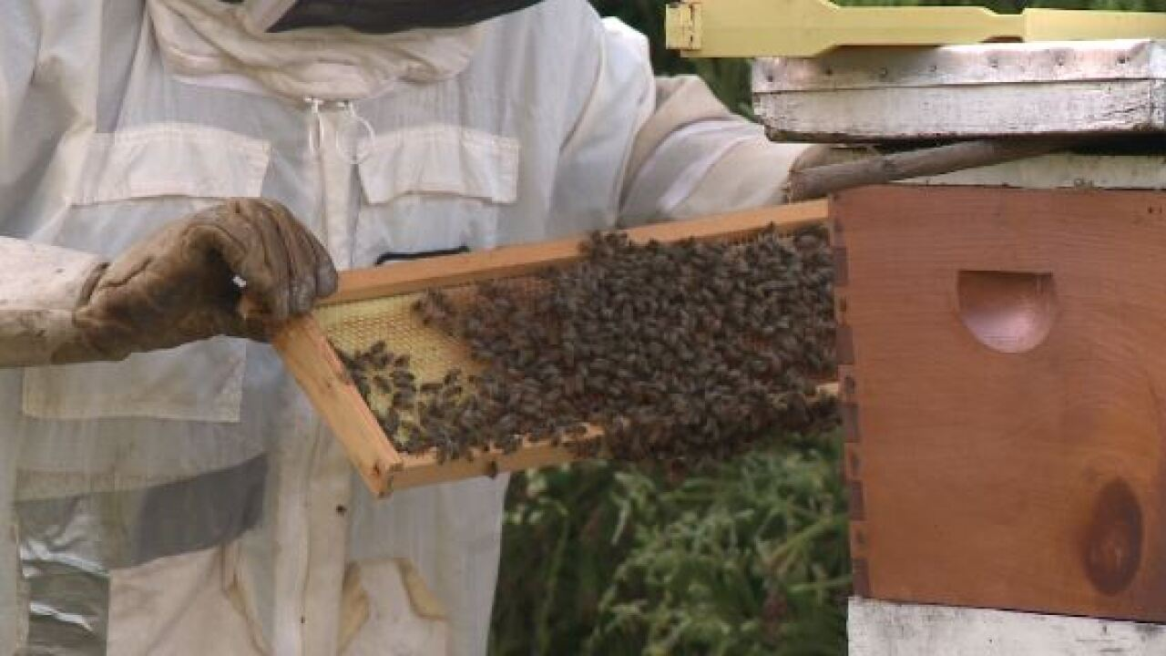 Beware of honeybee swarms in HamptonRoads
