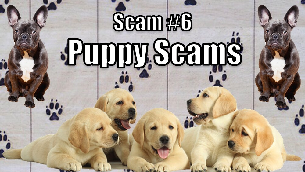 6. Puppy Scams