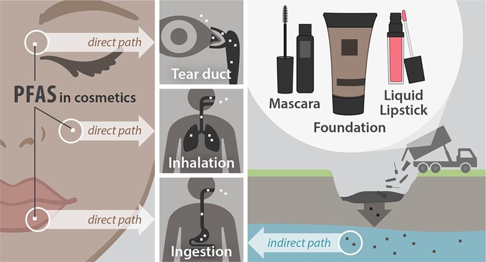 Diagram shows how PFAS enter your body.