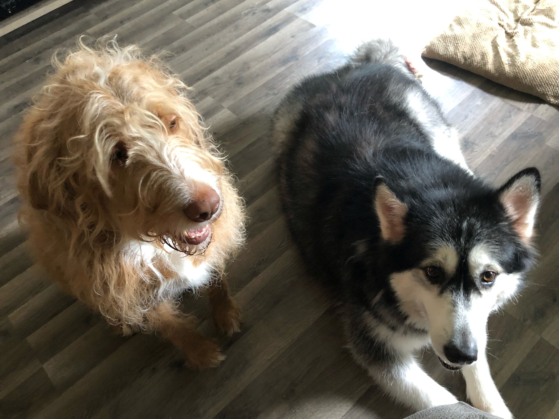 Louie (left) and Aurora (right).jpg