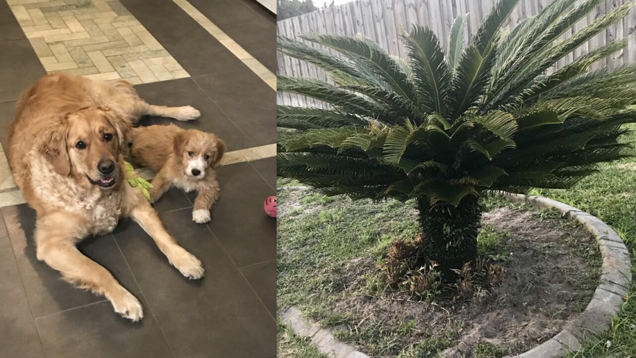dogs eat poisonous plant.jpg
