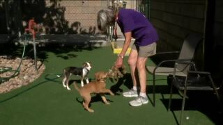 7Everyday Hero Carol Bennett has a passion for helping pups