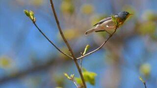 USFWS declares 23 species extinct