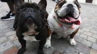 Apps like Rover and Wag are the 'Airbnb of pet-sitting.' But do they have drawbacks?