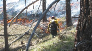 Bullock creates new advisory council to examine forest and wildfire conditions