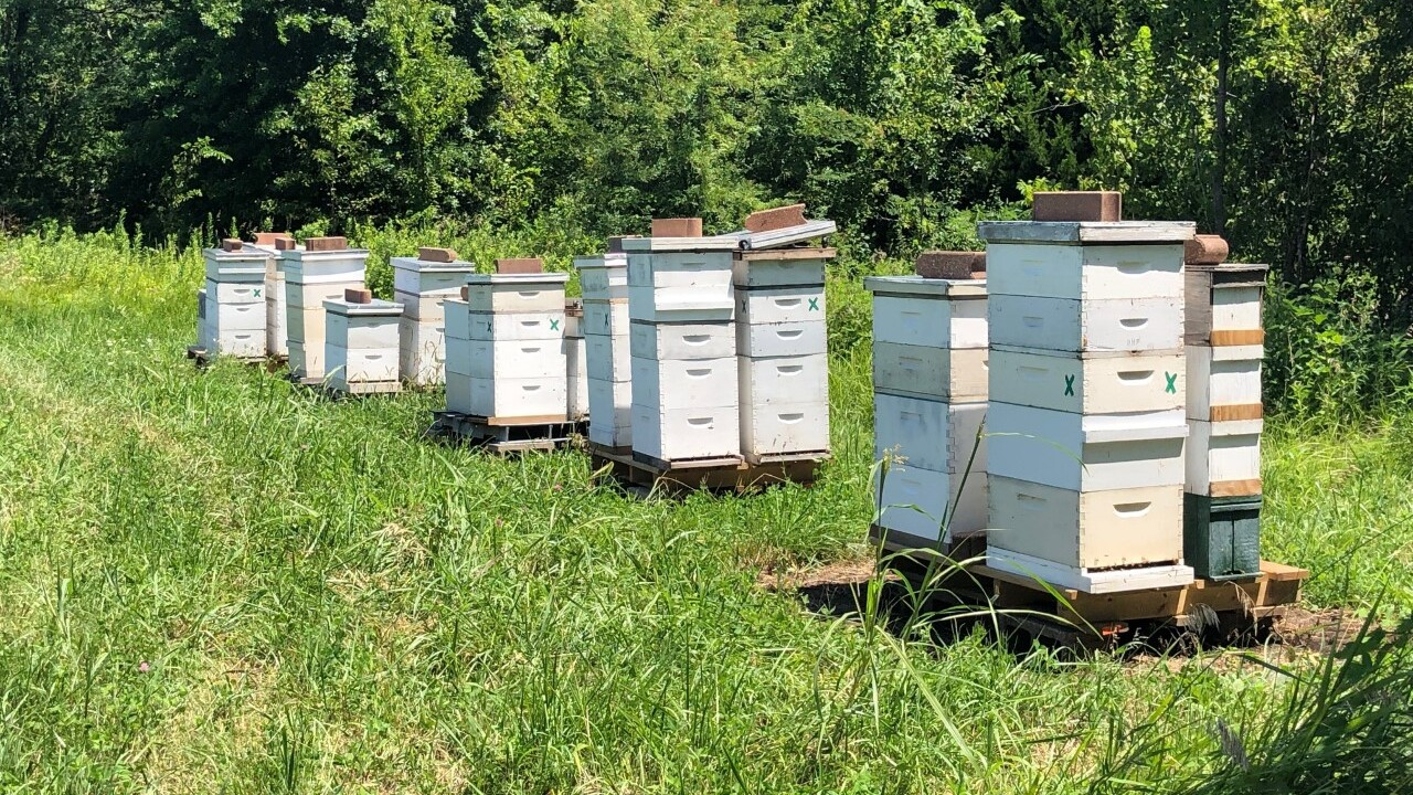 Platte City bee hives.jpg