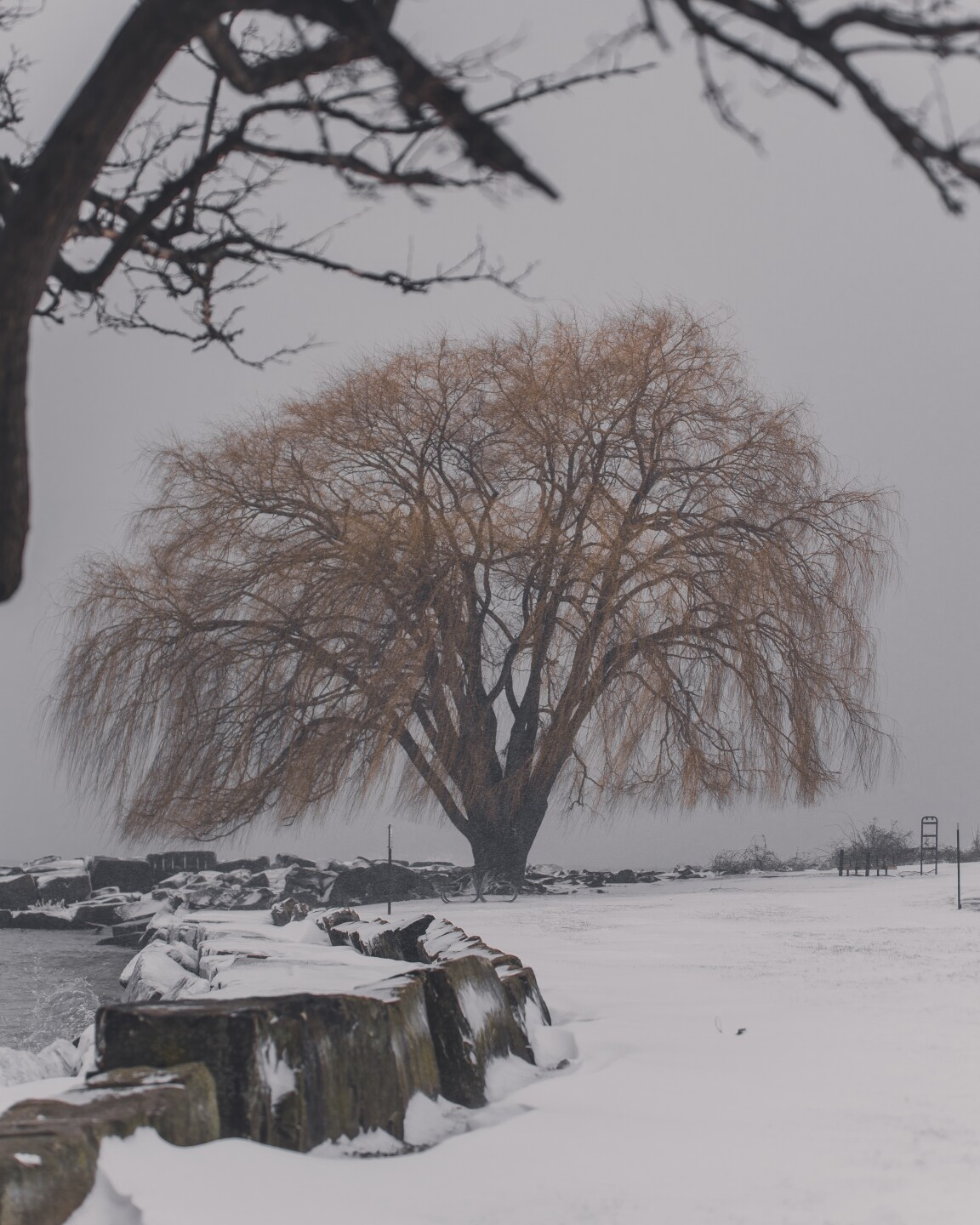 The Weeping Willow withstands harsh winter winds.