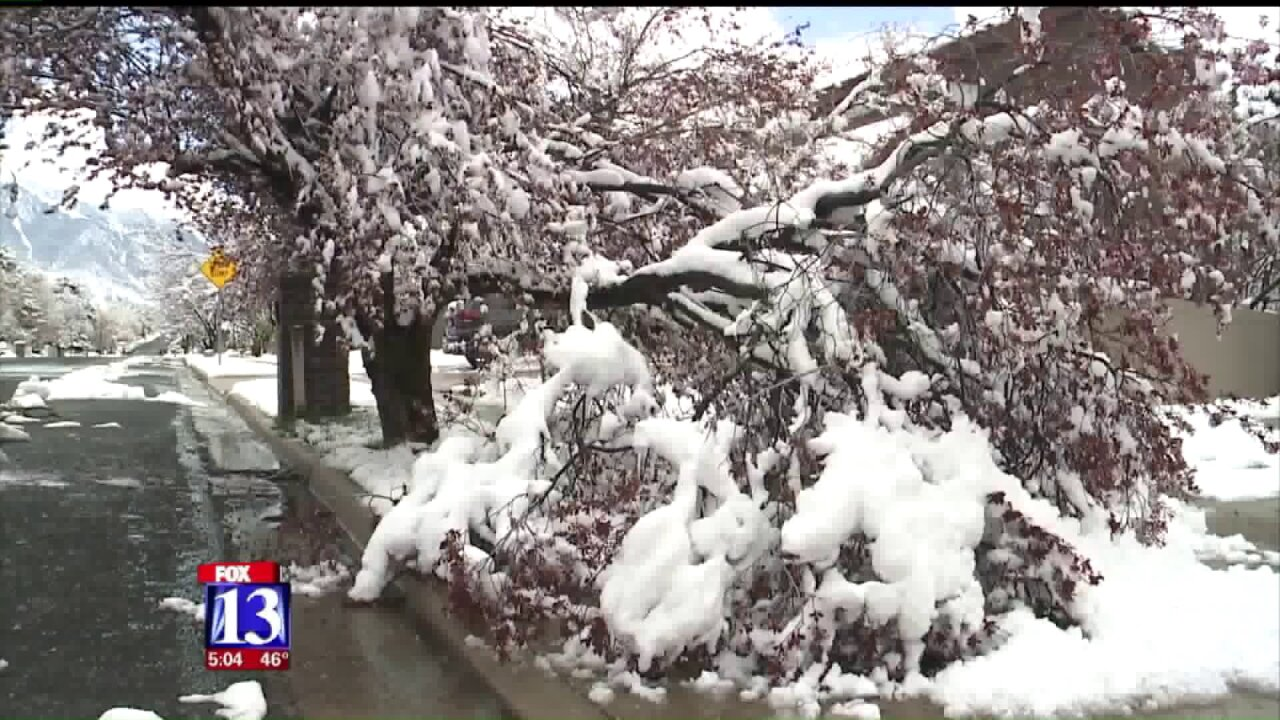 Trees toppled across the Salt Lake Valley after storm brings rain, snow, wind and hail