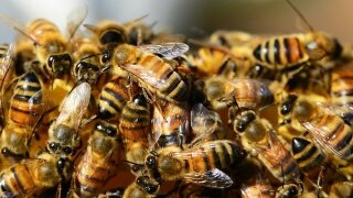 Man killed by swarm of bees in Arizona