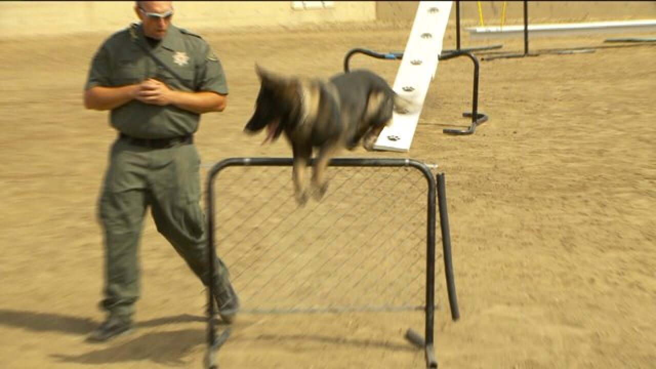 Annual event puts police and their K9 partners through their paces