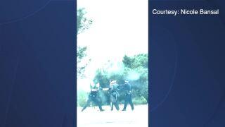 san diego police la jolla arrest 05122021.jpg
