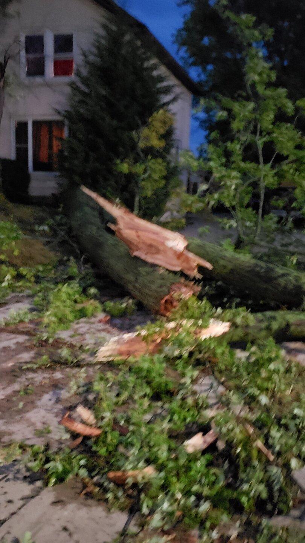 Tree-Down-Oconomowic.jpg