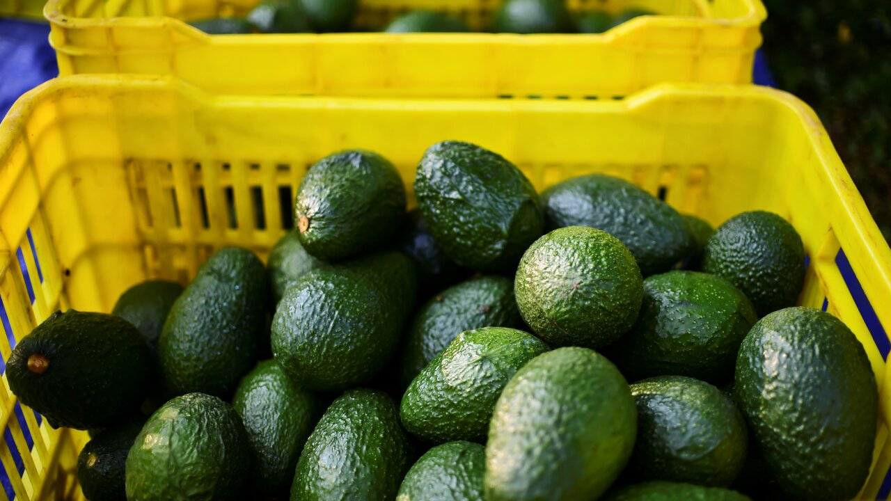Avocados recalled in 6 states over listeria concerns