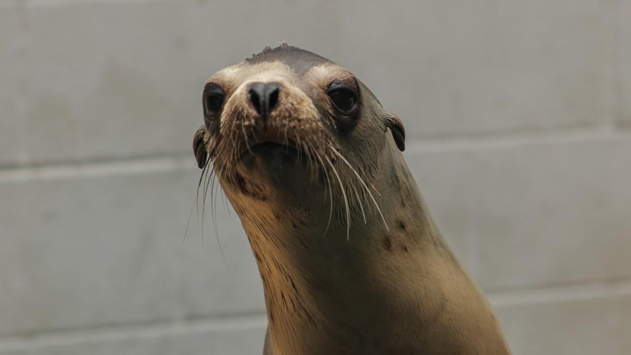 Marine Mammal Center: Sea Lion
