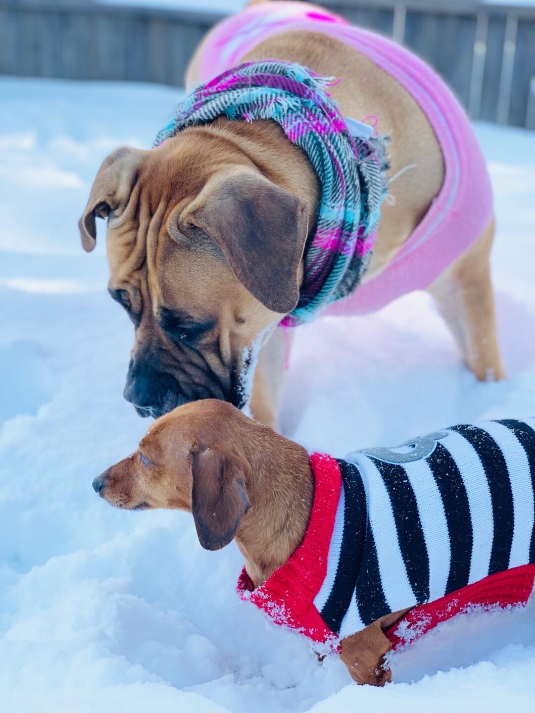 snow pups 9.jpg