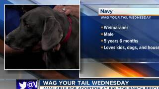 Wag Your Tail Wednesday - Journey and Navy
