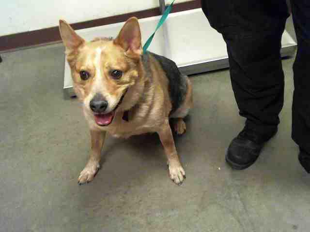 Adoptable pets from Arizona Humane Society and Maricopa County Animal Control (2/14)