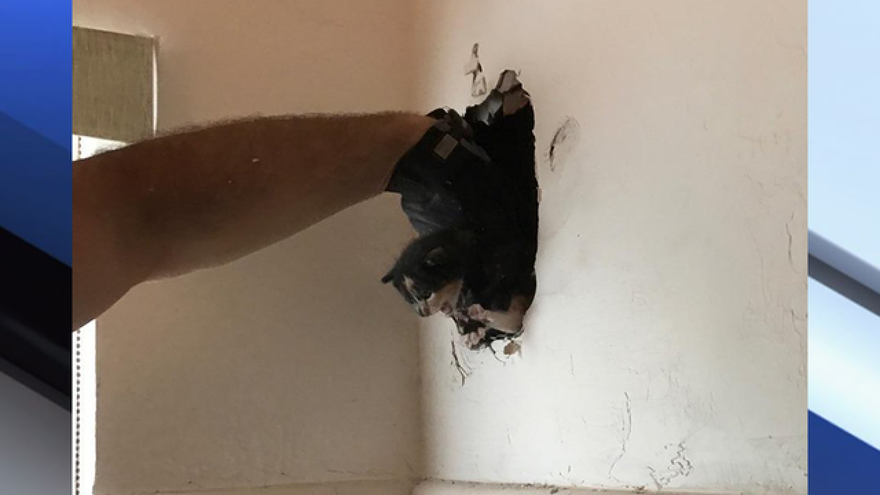 Firefighters rescue kitten stuck inside wall
