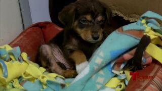 TANK puppies 0212.jpg