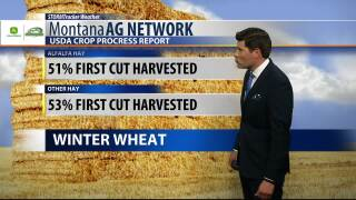 Montana Ag Network Weather: July 16th
