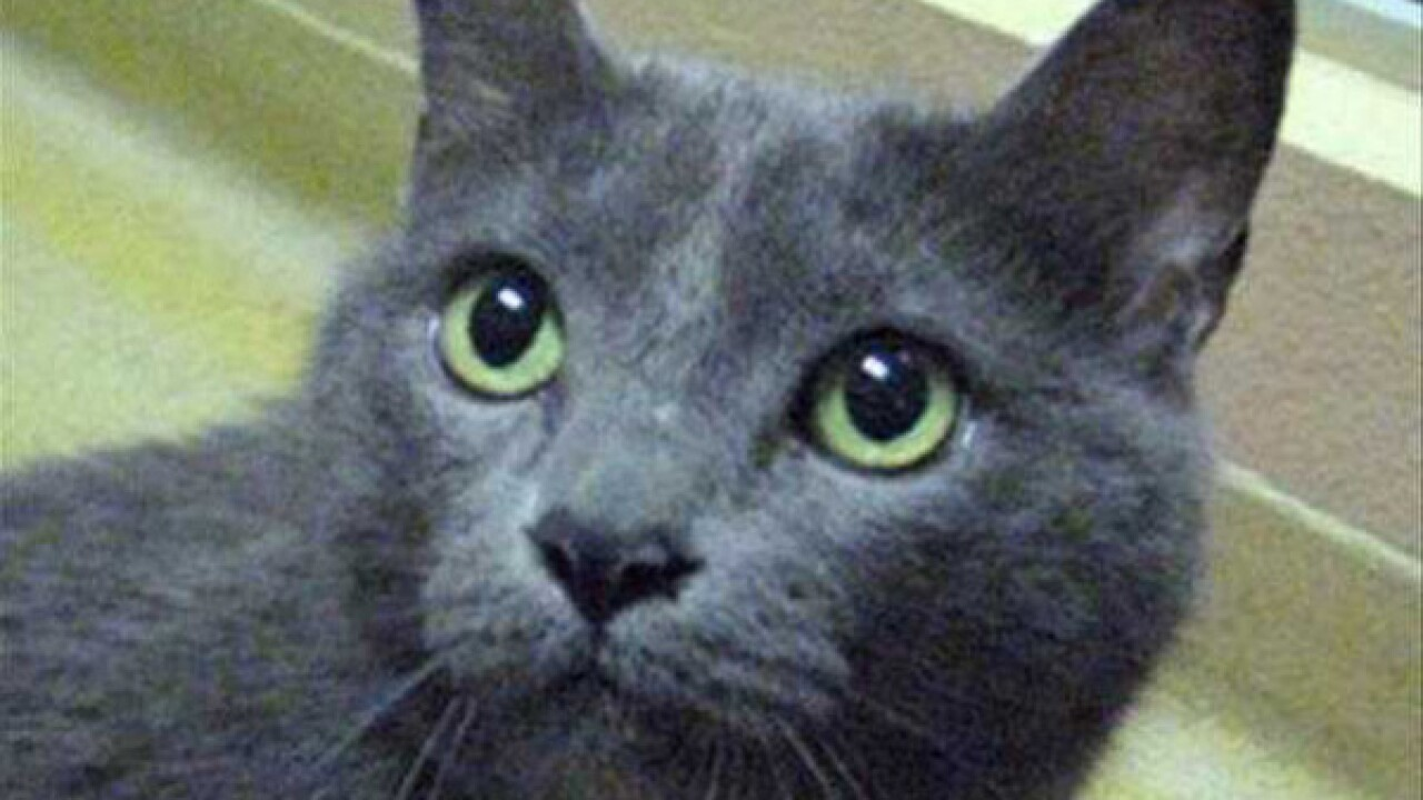 Pet of the Week: Alice