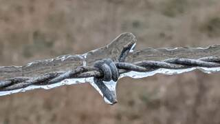 Riviera-Texas-where-even-the-barbed-wire-freezes-birdbath-frozen-vegetation-and-when-the-sun-came-out-and-started-melting-the-ice-on-the-roof-submitted-by-Barbara-Grayson3.jpg