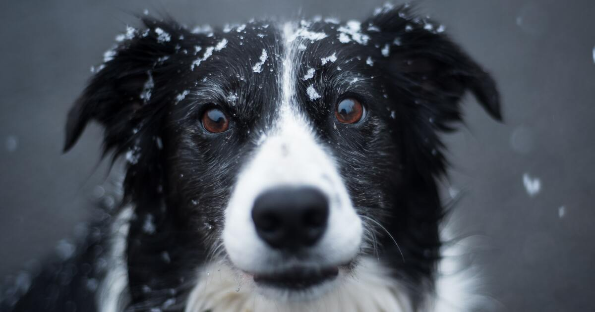 What to do if you find a pet left in the cold in Northeast ...