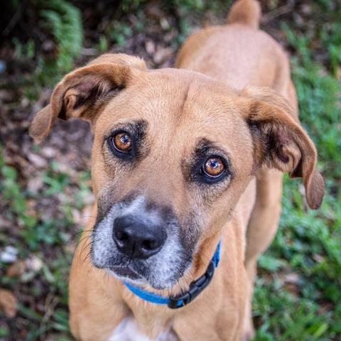 PHOTOS: 20+ adoptable pets in the Tampa Bay area for the weekend of November 2
