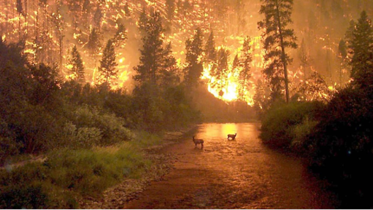 John McCol/Alaska Forest Service