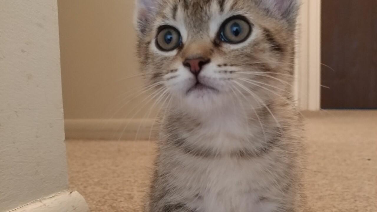 KittenThree.JPG