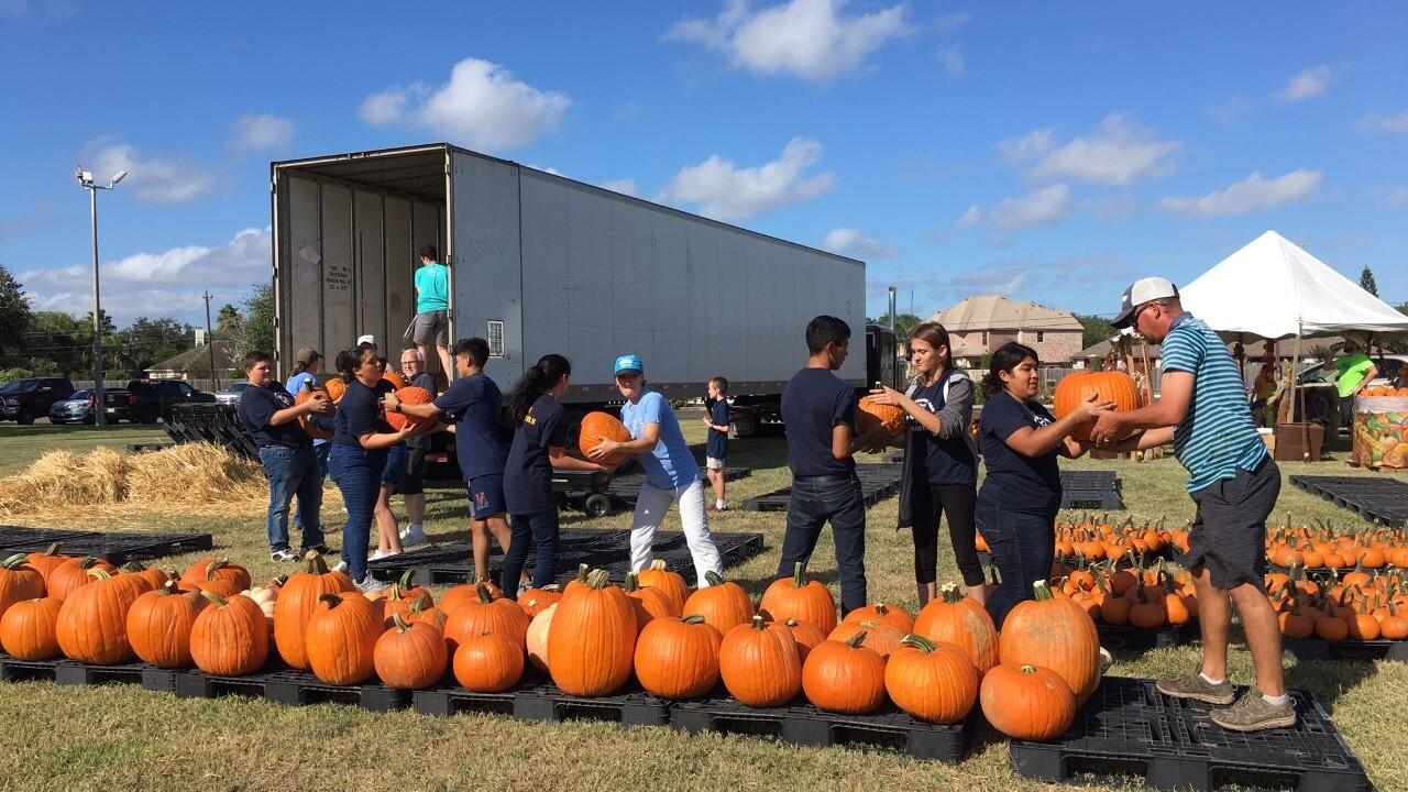 Pumpkin patch opens.jpg