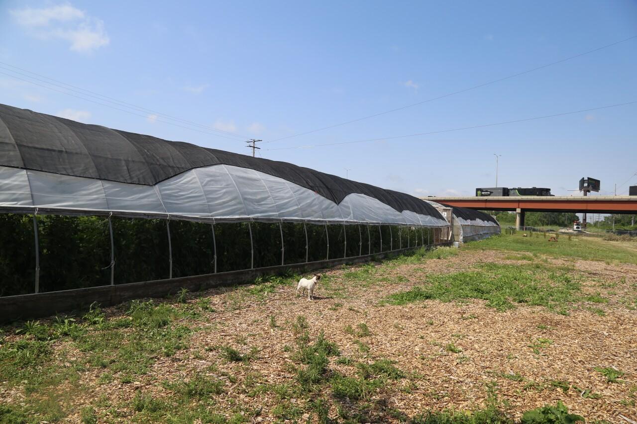 Urban Farms, Groundwork Milwaukee