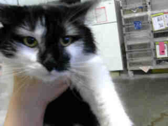Adoptable pets from Maricopa County Animal Care and Control and Arizona Humane Society (7/25)