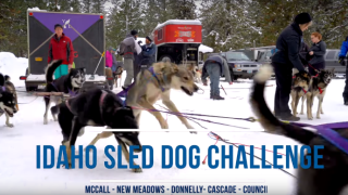 sled dog.png