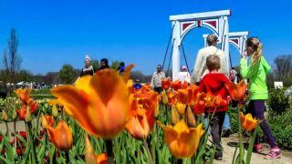 Amtrak adding tulip timeservice