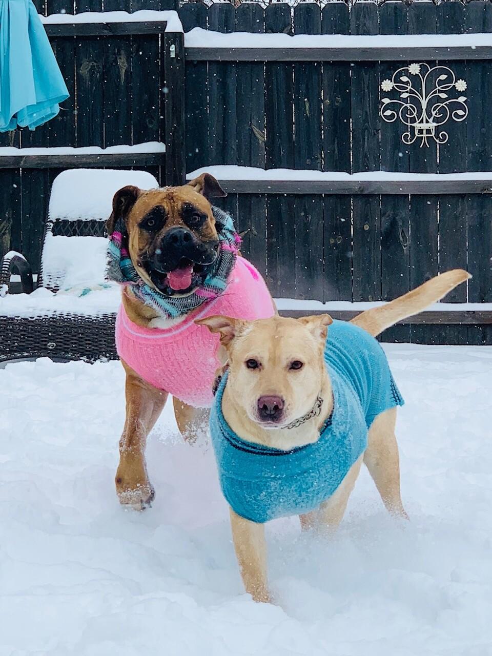 snow pups 7.jpg