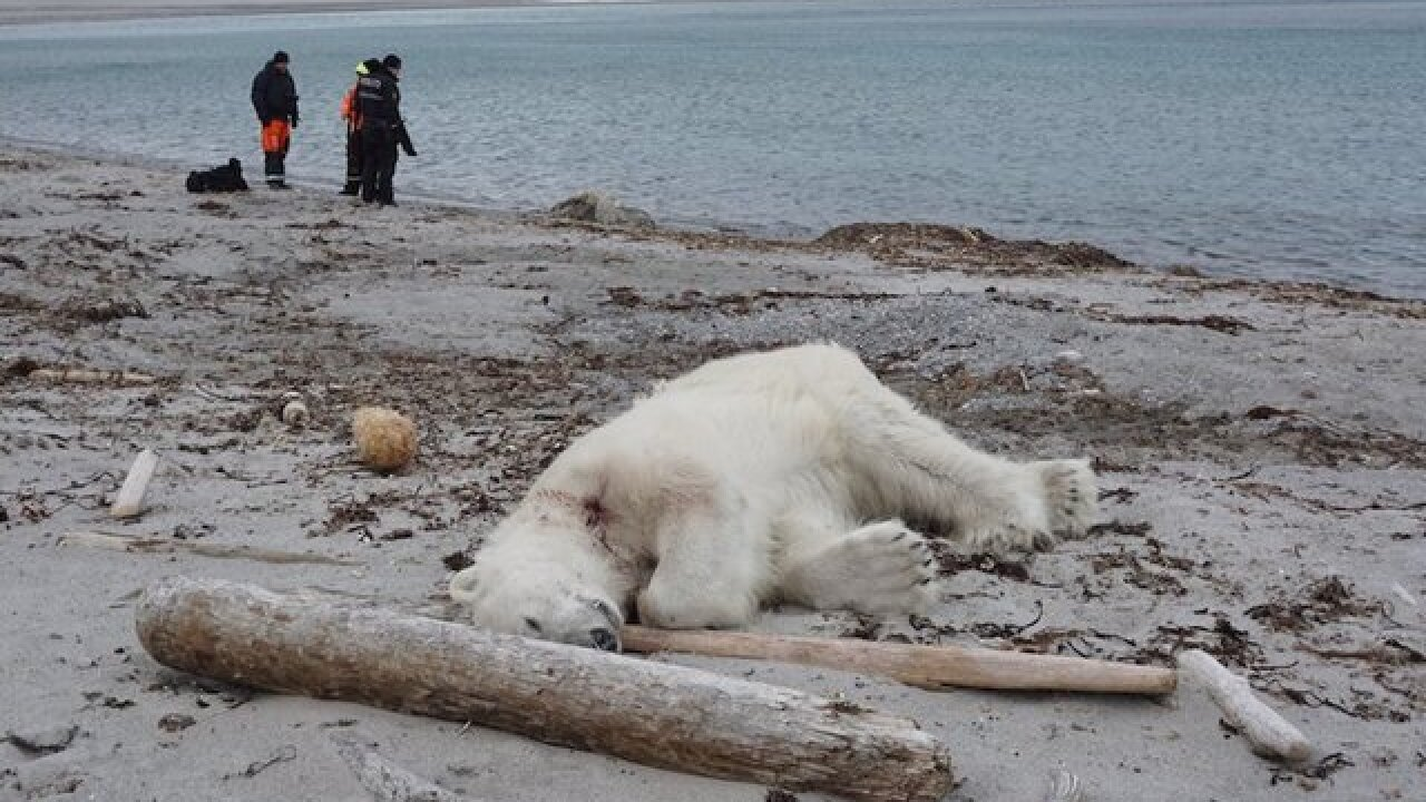 Cruise line faces backlash over shooting of polar bear