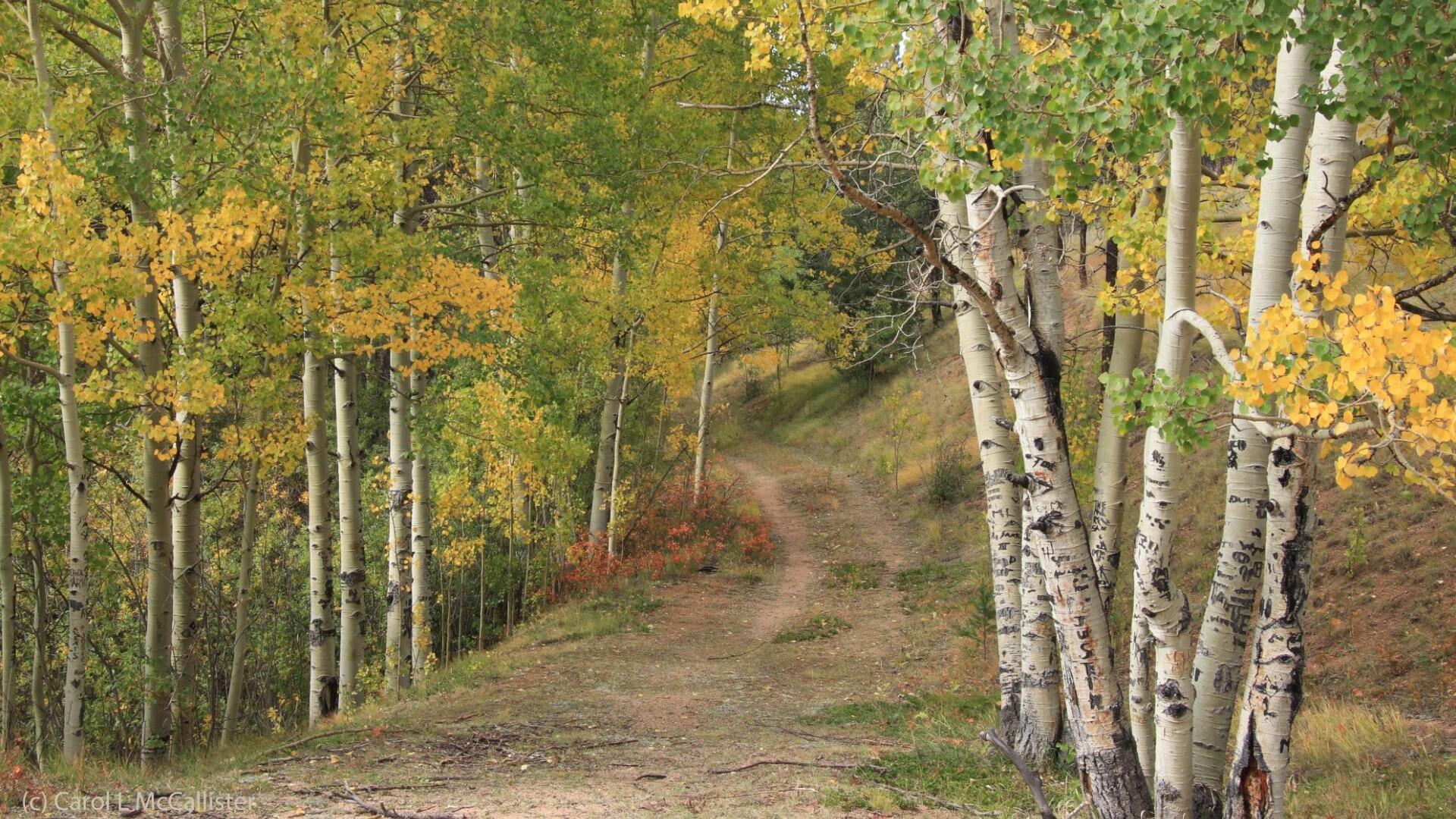 Pikes Peak Area Carol McCallister 2.jpg