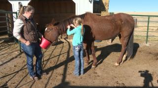 The Colorado Horse Network